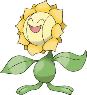 sunflora.jpg